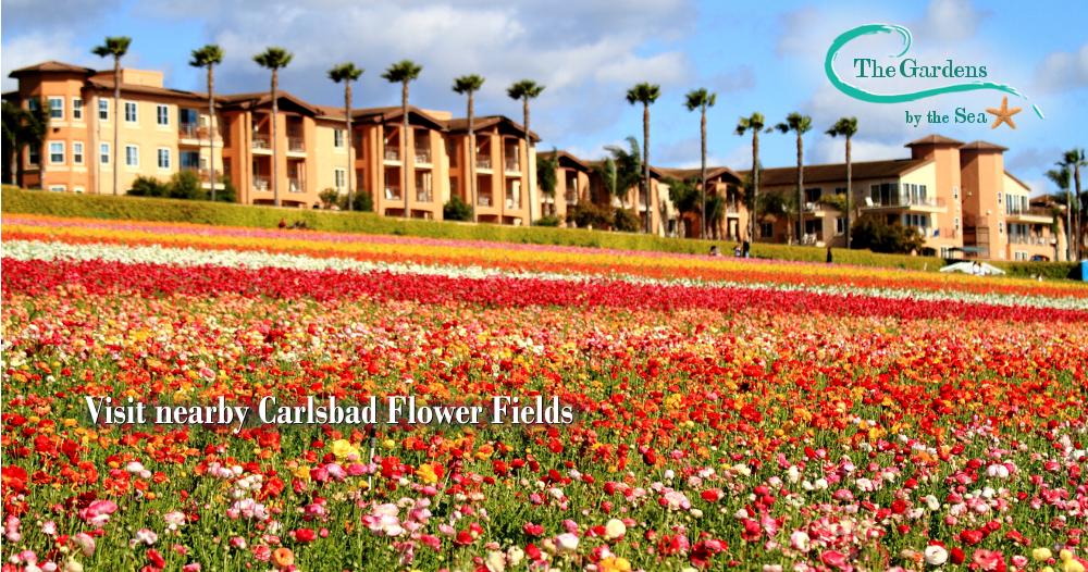 Exceptionnel The Gardens Provides Quality Care For Seniors In A Beautiful, Resort Like  Setting.